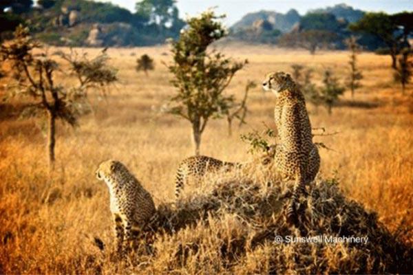 SSW-坦桑尼亚